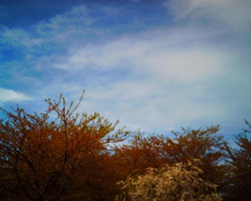 紅葉じゃないよ。葉桜だよ。