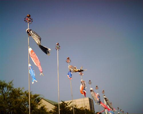 信濃川やすらぎ堤には鯉のぼりがいっぱい