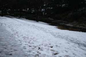 080205-snow2.jpg