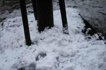 一面の雪2