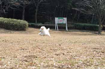 2008-MAR1-空飛ぶ子豚
