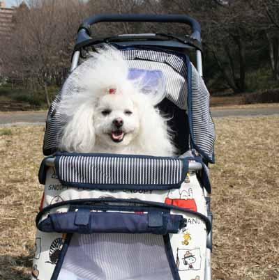2008-MAR1-るんばスヌーピー