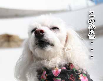 2008-03-01-サルサ音楽鑑賞1