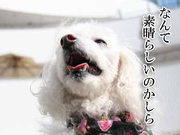 2008-03-01-サルサ音楽鑑賞2