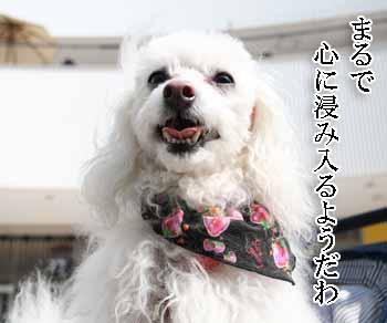2008-03-01-サルサ音楽鑑賞3