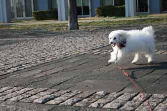 2008-03-01-サルサかけっこ