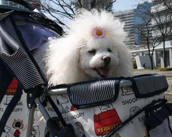 2008-03-6th-るんばカート