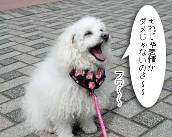 2008-04-1st-サルサ待ちぼうけのコピー