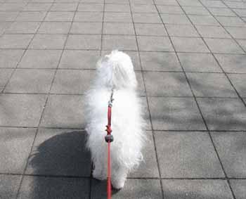 2008-04-02nd-広場