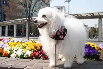 2008-04-02nd-花壇を見る
