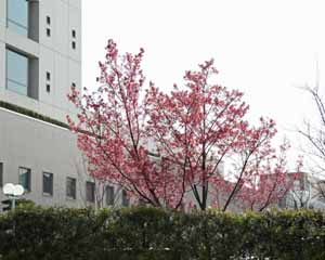 2008-04-02nd-花
