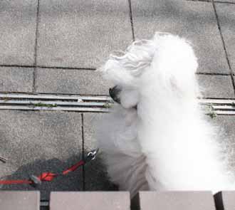 2008-04-02nd-ヨーロッパ犬2