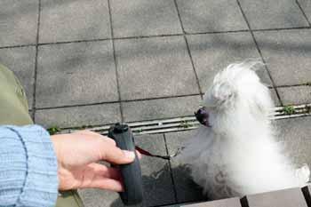 2008-04-02nd-ヨーロッパ犬