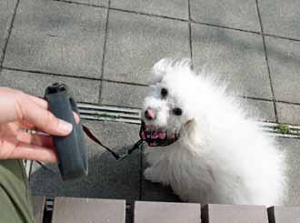 2008-04-02nd-ヨーロッパ犬3