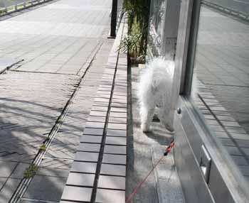 2008-04-02nd-ヨーロッパ犬後ろ姿
