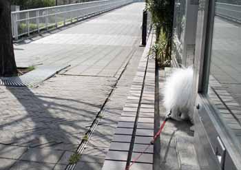 2008-04-02nd-ヨーロッパ犬探索1