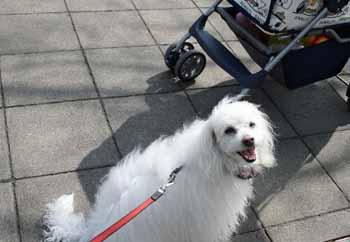 2008-04-02nd-ヨーロッパ犬自慢の顔