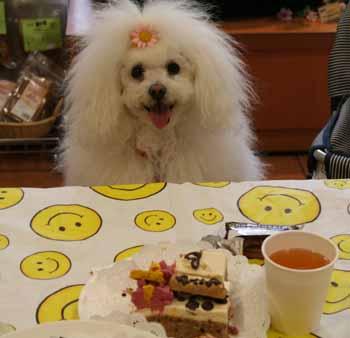 20080419-スリードッグお誕生会るんばケーキ前