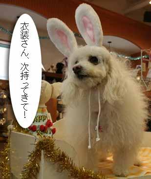 20080419-スリードッグお誕生会コスプサル衣装さん呼ぶ