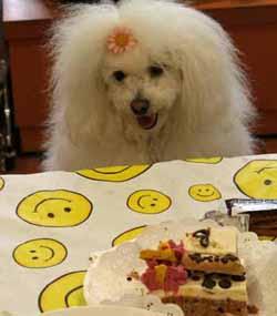 20080419-スリードッグお誕生会るんばケーキ前2