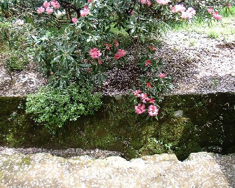 03室生桜