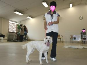 08-0427-satooyakai-4.jpg