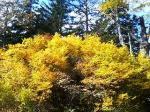鮮やかな黄色!!