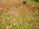 落葉もきれい!