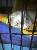 大豆の寝顔2
