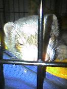 大豆の寝顔3