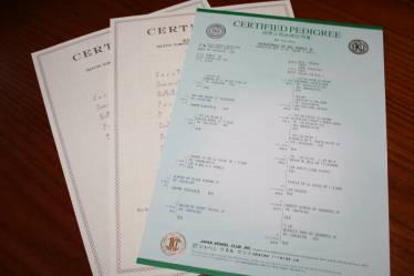 新しい血統証と合格証明書