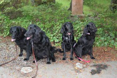 黒犬集合写真2