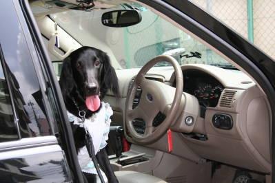 紗羅、運転席で・・・