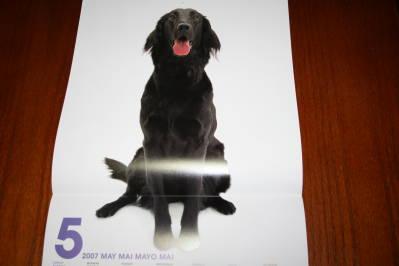THE DOGカレンダー5月、紗羅