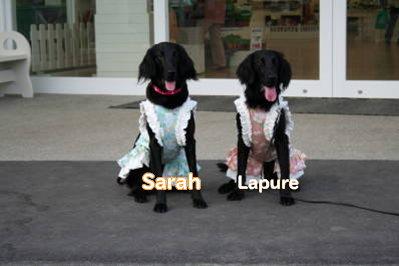 sarah&lapure