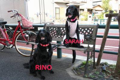 sarah&rino