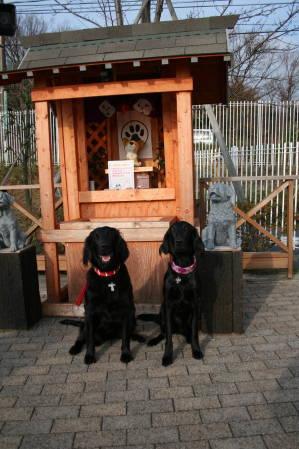 ドックフォレスト犬神社の前で。