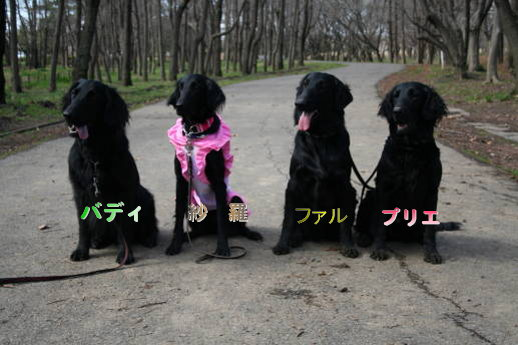 黒犬集合写真