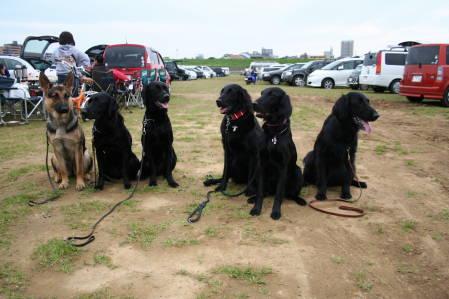 黒犬大集合