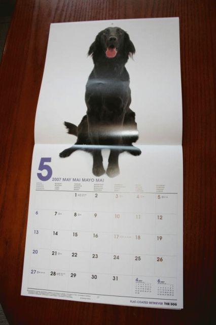 THE DOGカレンダー①