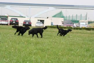 黒犬in土手