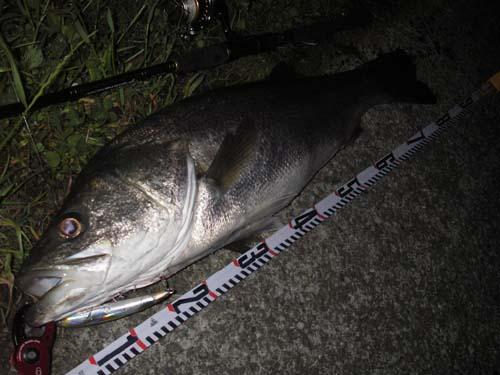 熊本県のお客様からの釣果報告、其の一