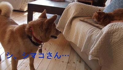 kaiwa4.jpg