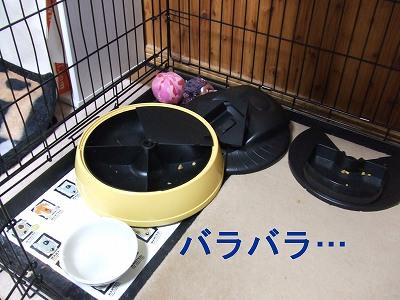 kyujiki2.jpg
