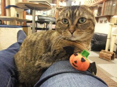 キラかぼちゃ