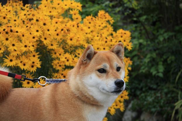 乙女ですから、お花とね