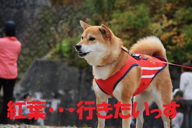石川県 元太 006