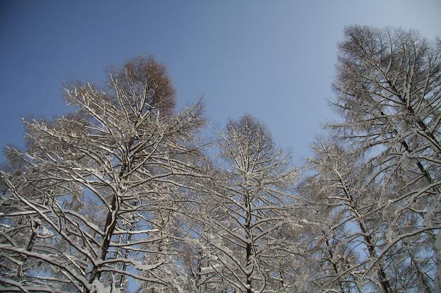 21 2月22日 雪遊び 140