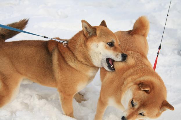 21 2月22日 雪遊び 203