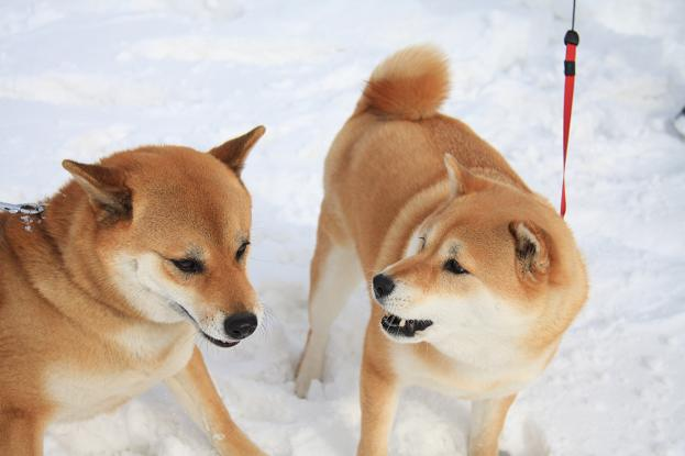 21 2月22日 雪遊び 206